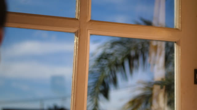 the view out a window of a palm frond tree at the beach. - frond stock videos & royalty-free footage