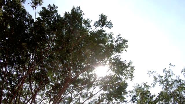 der blick unter den baumkronen, sich bewegend, rotierend mit sonnenlicht. - boulevard stock-videos und b-roll-filmmaterial