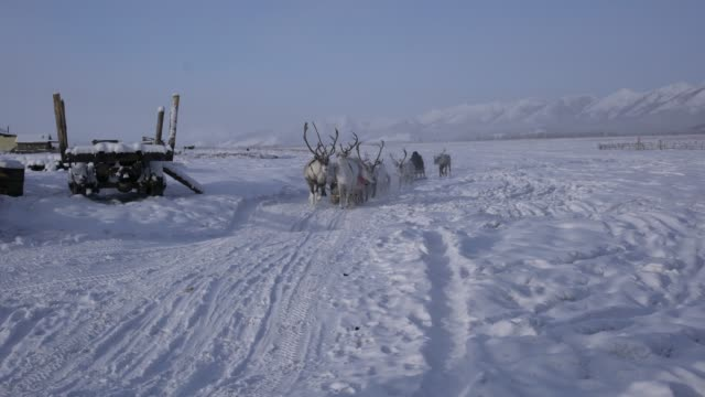 the village of yuchugey, sakha republic , russia; february 19, 2019: evenki reindeer herders sledging in yuchugey, a village inhabited by evenki... - 牧夫点の映像素材/bロール