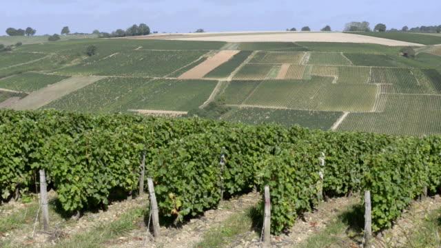 vídeos y material grabado en eventos de stock de the vineyards near sancerre in the loire valley - paisaje mosaico
