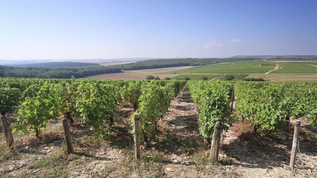 the vineyards of sancerre, france. - french culture stock videos & royalty-free footage