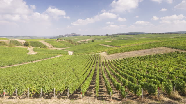 vídeos de stock e filmes b-roll de the vineyards of sancerre, france. - uva