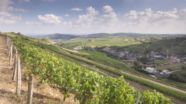 The vineyards of Sancerre, France.