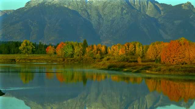 the water in oxbow bend reflects autumn trees and mountains in grand teton national park. - grand teton national park stock videos & royalty-free footage