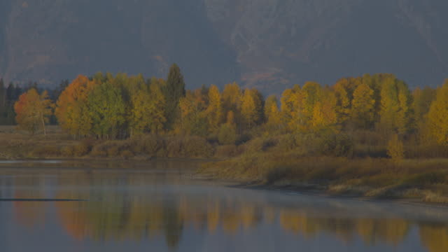 the water in oxbow bend reflects autumn trees in grand teton national park. - grand teton national park stock videos & royalty-free footage