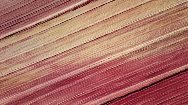 die welle in arizona - gebäudefries stock-videos und b-roll-filmmaterial