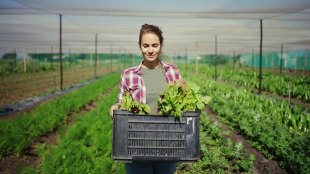 the weather's been perfect for the harvest - carrying stock videos & royalty-free footage