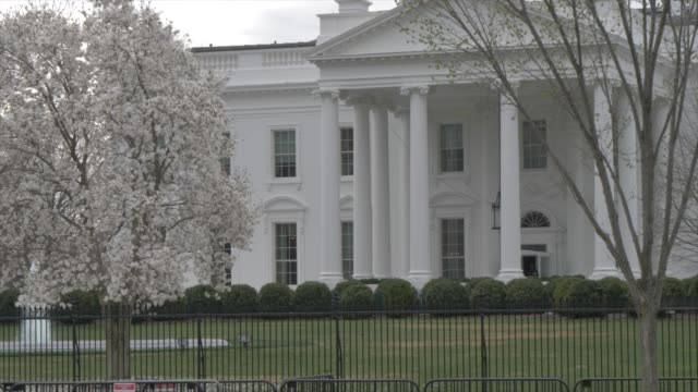 The White House and cherry blossom from Lafayette Square, Washington DC, United States of America, North America