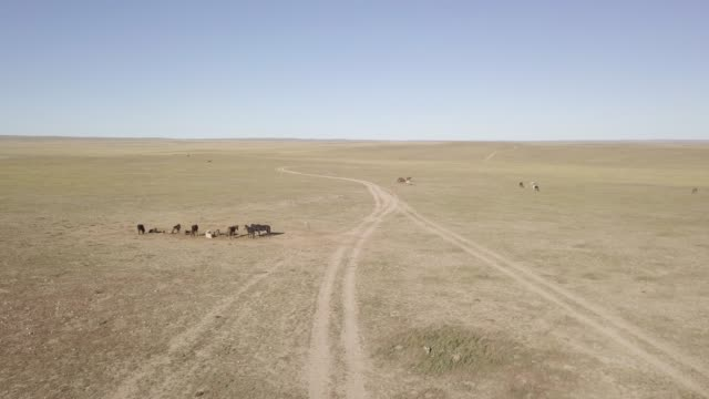 the wide open landscapes and steppe of mongolia, central asia, asia - independent mongolia stock videos & royalty-free footage