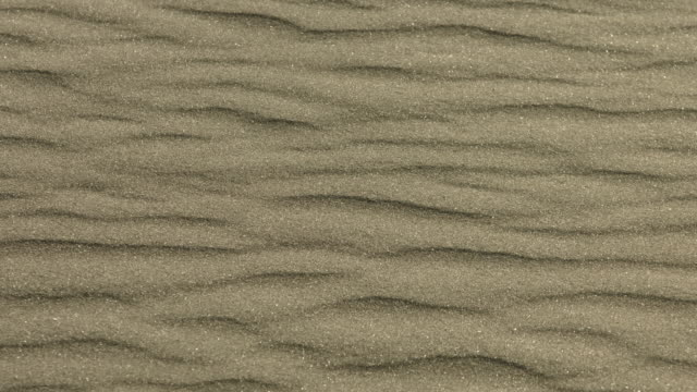 The wind blows sand grains across a beach.