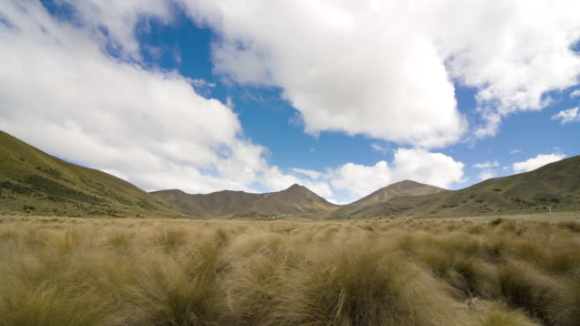 vídeos de stock, filmes e b-roll de the wind blows through the tussock on the lindis pass, south island, new zealand. - pasto campo