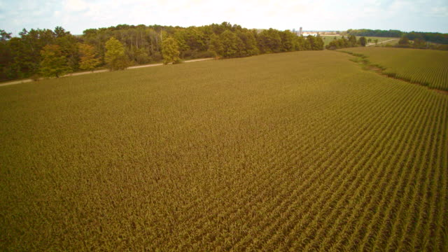 the wind power farm in the corn fields in ontario province, canada. aerial drone video. - ontario canada stock videos & royalty-free footage