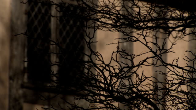 stockvideo's en b-roll-footage met the wind rustles bare tree branches. available in hd. - bare tree