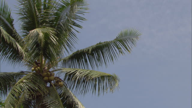the wind rustles the fronds of a palm tree. - やしの葉点の映像素材/bロール