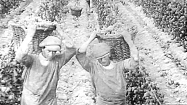 vidéos et rushes de the winemaking process in the 1920's - argentine