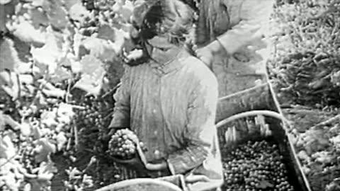 the winemaking process in the 1920's - 1920 1929 bildbanksvideor och videomaterial från bakom kulisserna
