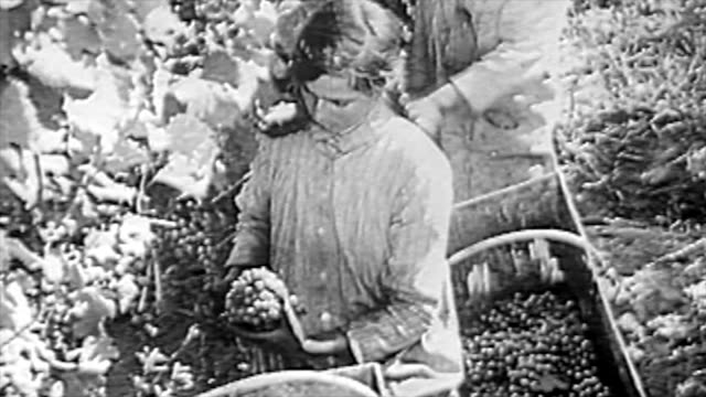the winemaking process in the 1920's - 1920 1929 stock videos & royalty-free footage
