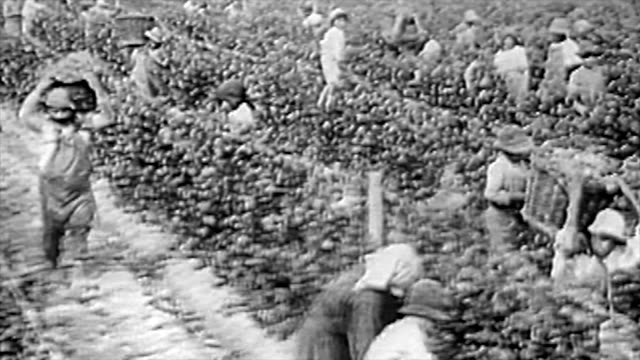 the winemaking process in the 1920's - winemaking stock videos & royalty-free footage