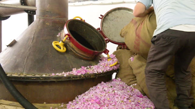 the worker is pouring roses into the distillation barrel. - essential oil stock videos and b-roll footage
