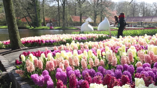 the world famous keukenhof gardens in lisse in the netherlands, the most famous spring garden in the world. - plant bulb stock videos & royalty-free footage