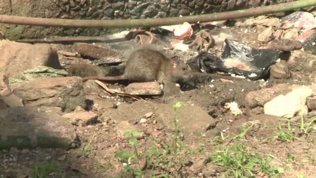 the world health organisation says it is boosting its response to a plague outbreak in madagascar that has killed 24 people as the government bans... - epidemia video stock e b–roll