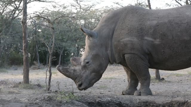 The world is embarking on its sixth mass extinction with animals disappearing about 100 times faster than they used to scientists warned Friday and...