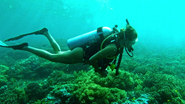 the world looks way better under water - scuba diving stock videos & royalty-free footage