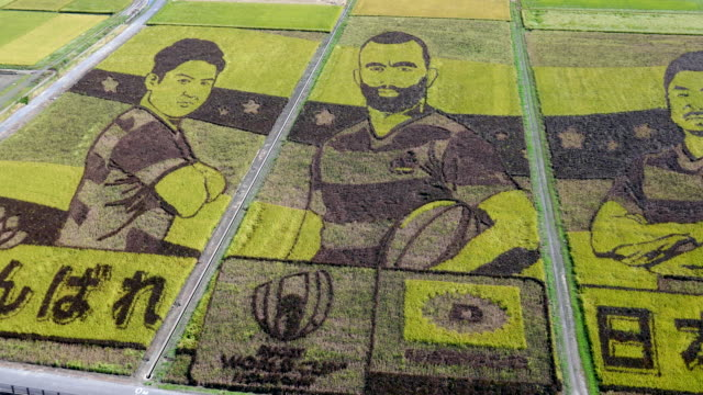 vidéos et rushes de the world's largest rice paddy art with the design of the japan national rugby team members is seen from the rooftop of ancient lotus hall on october... - chapeau de paille