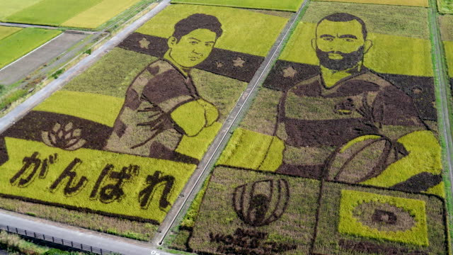 the world's largest rice paddy art with the design of the japan national rugby team members is seen from the rooftop of ancient lotus hall on october... - saitama city stock videos & royalty-free footage