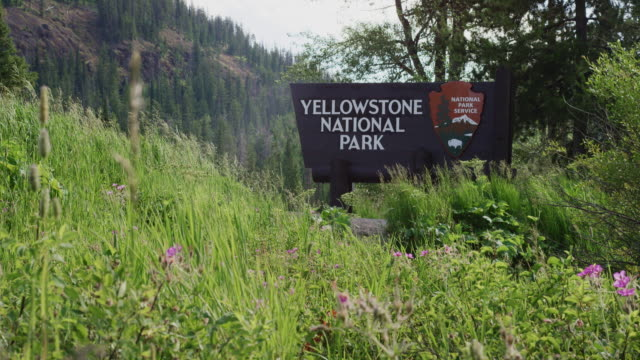 the yellowstone national park welcome sign surrounded by forest and the rocky mountains - yellowstone national park stock videos & royalty-free footage