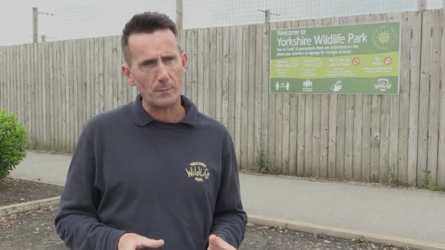 the yorkshire wildlife park prepares to reopen on monday including quotes from chief exec john minion he explains how the news that they would be... - working animals stock videos & royalty-free footage