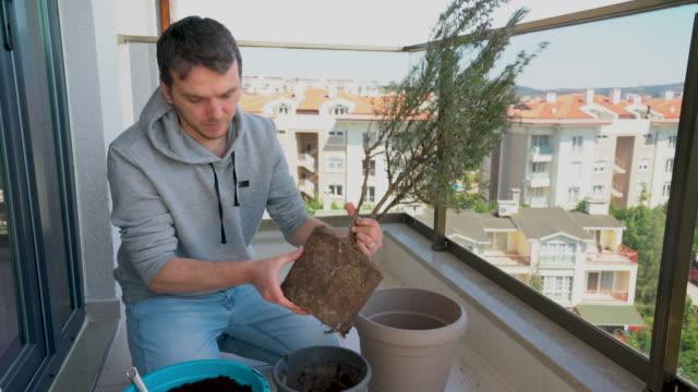vidéos et rushes de le jeune homme repotting rosemary plant sur le balcon - jardinage à la maison - jardiner