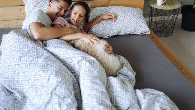 their dog gets all love and attention - pet bed stock videos and b-roll footage