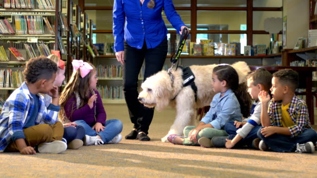 therapy dog, down syndrome girl, friends in library - learning disability stock videos & royalty-free footage