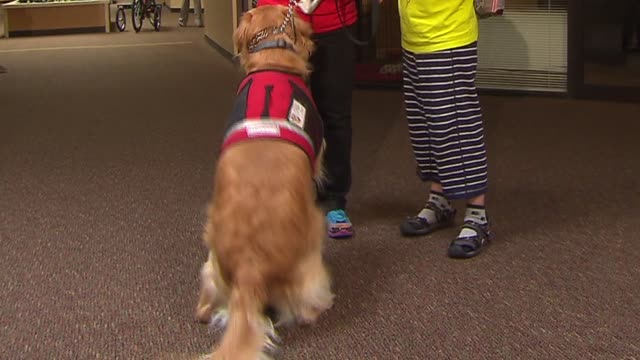 wgn a therapy dog helps children with autism at giant steps autism school on april 29 2014 - 自閉症点の映像素材/bロール
