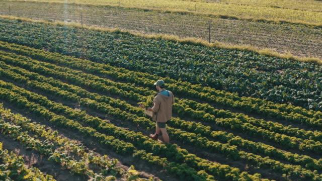 農場でやるべきことは常にあります - 園芸学点の映像素材/bロール