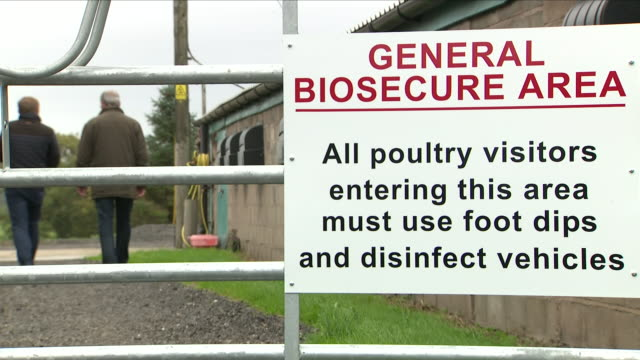there are warnings that a no deal brexit may compromise the uk's biosecuritythe protection of plants and animals are intertwined in eu rules and as... - risk stock videos & royalty-free footage