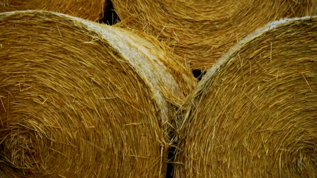hay bale - hay stack stock videos & royalty-free footage