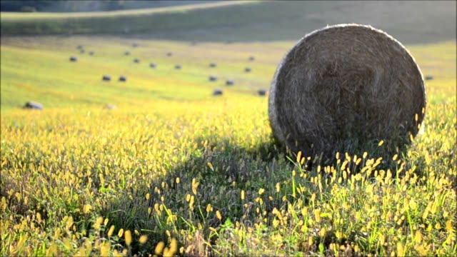 hay bale - bale stock videos & royalty-free footage