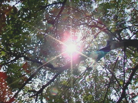 There is sunlight between the branches,...behold!
