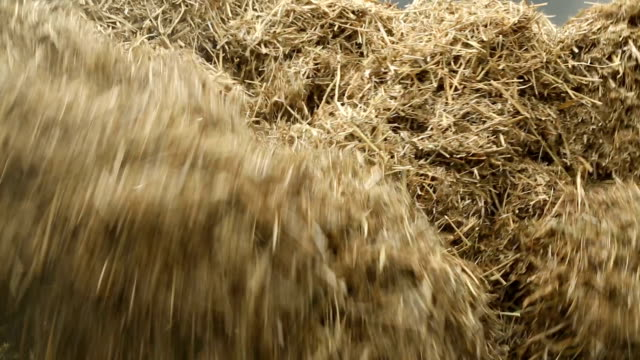 hay - hay field stock videos & royalty-free footage