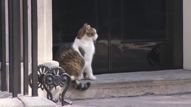 theresa may announces she will resign as conservative party leader on jume 7th 2019 wide shot england london downing street ext door to number 10... - downing street stock-videos und b-roll-filmmaterial
