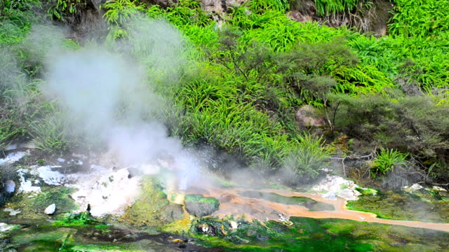 thermal fountain - whakarewarewa stock videos and b-roll footage