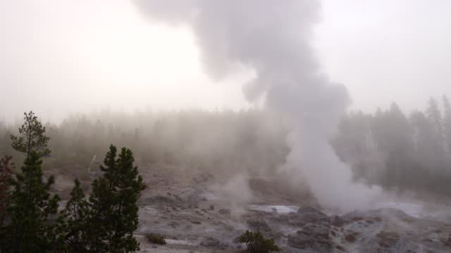 WS TD Thermal pool hot spring geyser with forest trees and sky at morning / Yellowstone National Park, Wyoming, United States