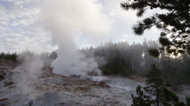 ws thermal pool hot spring geyser with forest trees and sky at morning / yellowstone national park, wyoming, united states - thermal pool stock videos & royalty-free footage