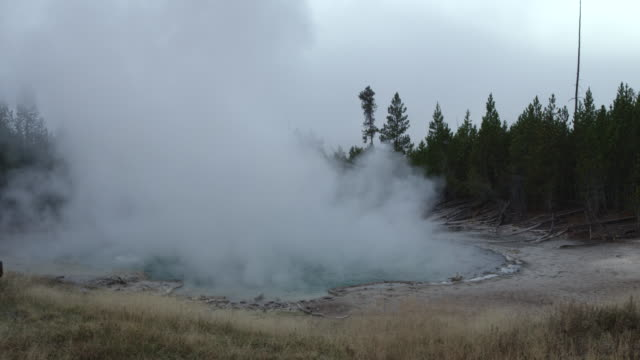 MS Thermal pool hot spring geyser with forest trees at morning / Yellowstone National Park, Wyoming, United States