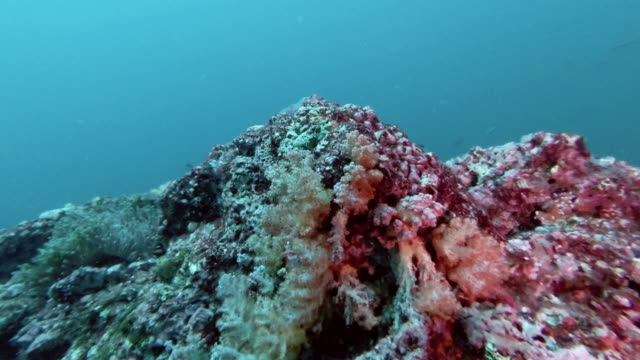thermocline cold thermal sea water layer from mesopelagic zone - tide stock videos & royalty-free footage