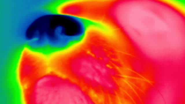 thermogram of a dog nose - thermal imaging stock videos & royalty-free footage