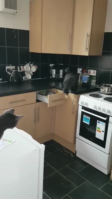these cats love their toys, but somehow they were hidden in the drawer by their owners, but nothing could keep them away from their toys, so they... - drawer stock videos & royalty-free footage