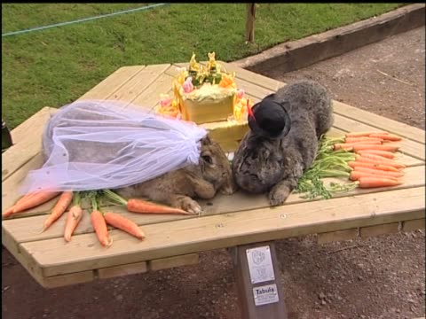 These two rabbits get all dressed up to make their bond with each other forever It's a real life rabbit wedding
